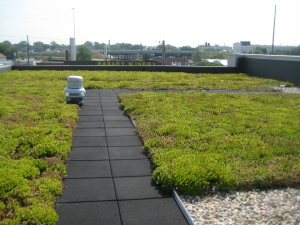 Plants on a roof